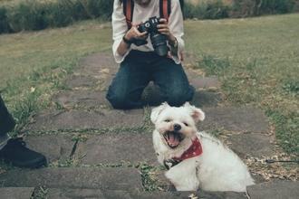 Cherche chien dressé ayant l'habitude des tournages pour pub web