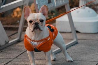 Recherche figurante de plus de 70 ans avec un chien pour publicité