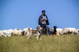 Recherche un mouton et un chien loup pour une scène d'un film à Bordeaux
