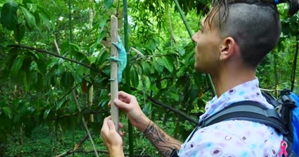 Un caméléon à Madagascar